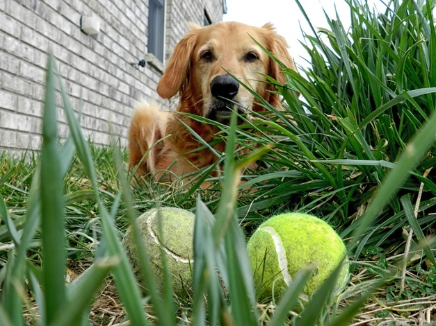 10 Creative Uses for Tennis Balls